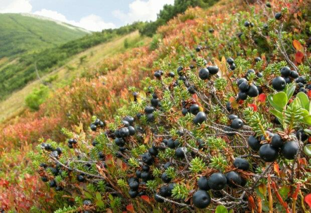 Lviv farmers will create a dryer for berries, powered by solar energy