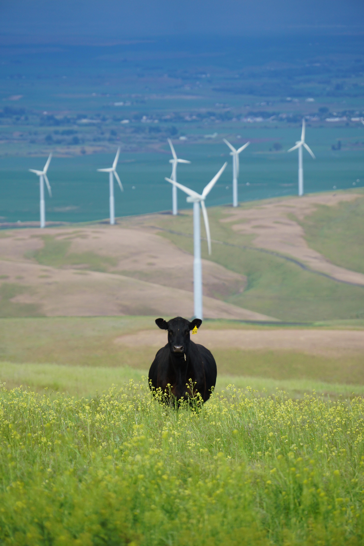 Урезание «зеленого» тарифа. Как резкие движения в сторону ВИЭ вредят инвестиционному климату